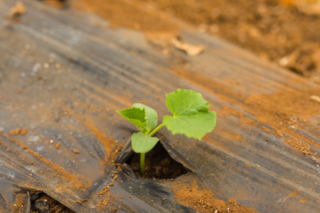 Seedling plants planted in greenhouse family business. Agriculture Stock Photo