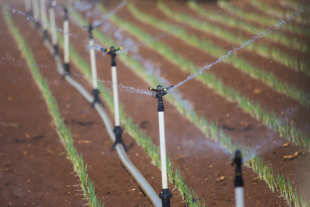 Greenhouse with leek field watering system action Stock Photo