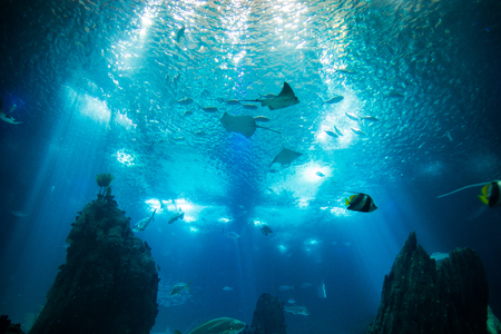 Oceaan gigantische viswereld in aquarium ter observatie in Lissabon Stockfoto - 84358384