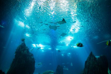 Oceano gigante pesce mondo in acquario per osservazione a Lisbona Archivio Fotografico - 84358384