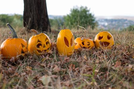 Halloween pumpkin on leaves in woods. Autumn season. Stock Photo