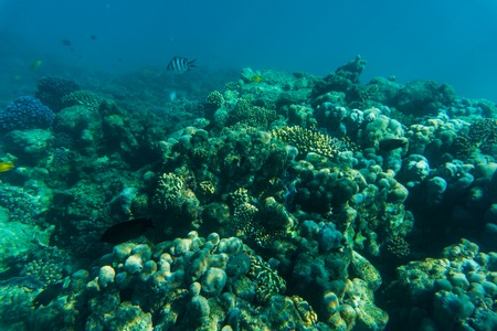 Sea or ocean underwater coral reef sea