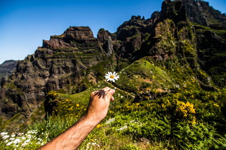 Hands with flowers on mountains road between two peaks Pico Ruivo and Pico do Areeiro
