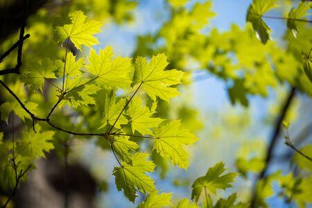 Grüne Baumblätter und Äste mit Regentropfen auf dem Himmelshintergrund
