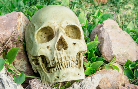 configured: human skull on the rocks in the garden at the backyard Stock Photo