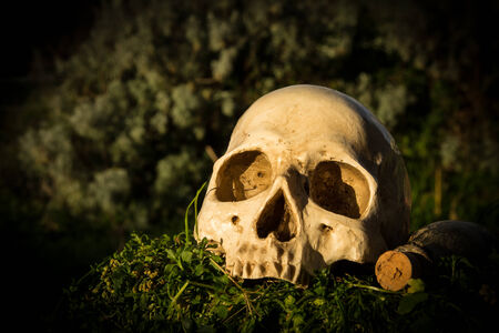 configured: still life skull in the garden at the backyard of the house