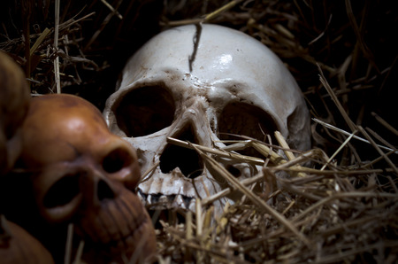 genocide: still life style of the genocide skulls left on dry straw