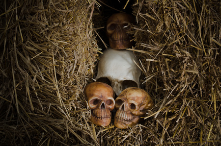 genocide: still life style of the genocide skulls left on dried straw Stock Photo