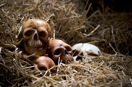 genocide: still life style of the genocide skulls left on straw