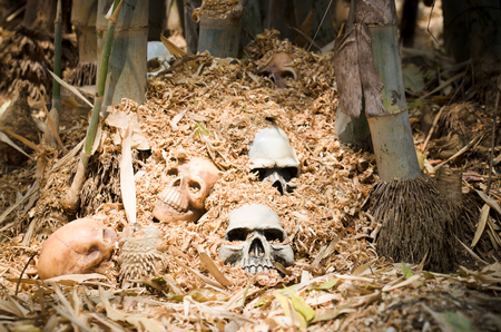 genocide: still life of genocide human skulls left under the bamboo tree