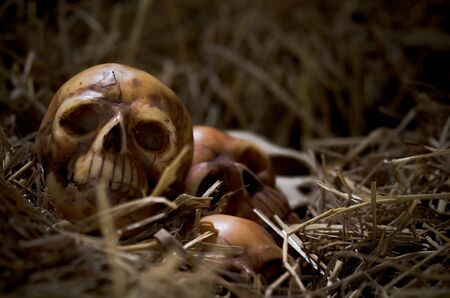 genocide: still life style of the genocide skulls left on hay