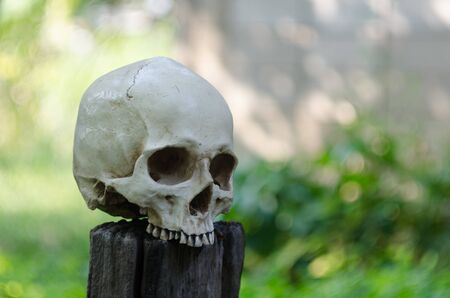 geen: vintage beautiful human skull with geen bokeh background on the log