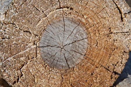 particular of a log, with circles and knots photo