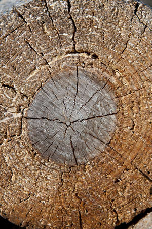 particular of a log, with circles and knots Stock Photo