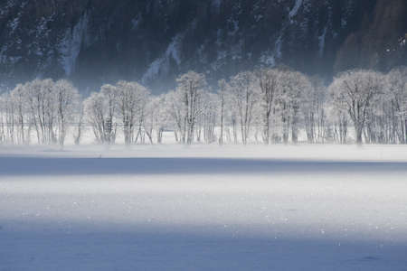 frosted trees in the valley of pfitsch in sudtirol photo