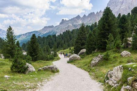 rosengarten: Path in the forest in the Rosengarten Group of Dolomites.