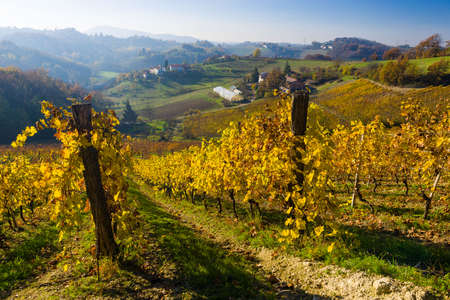 piedmont: View over the vineyards of Piedmont during Autumn