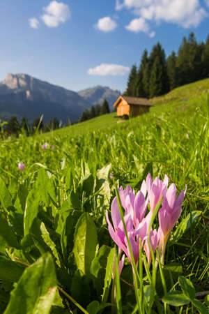 fassa: Summer view over fields and mountain hut in the Dolomites of the Fassa  Valley Stock Photo