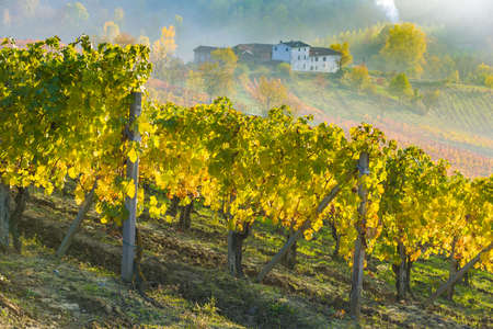 The colors of Fall in the vineyards of Rivalta, in Piedmont, Italy