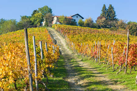 Autumnal colors in the vineyards near Ovada, Piedmont