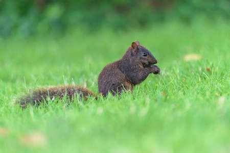 Squirrel standing in a field