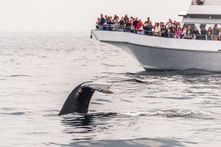 Watching the whales in the Stellwagen Bank Marine Sanctuary in Massachusetts