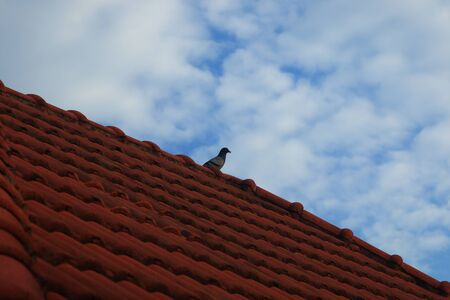 bird on roof and blue sky and white alto cumulus cloudy . Stock Photo
