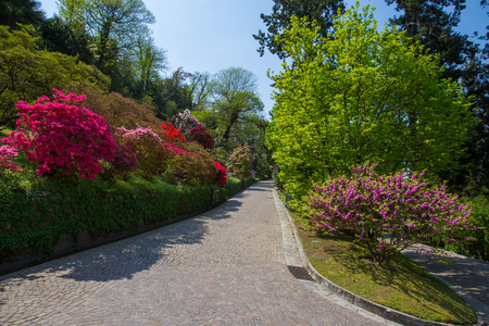 Colorful azalea in the botanical garden of Villa Taranto in Pallanza, Verbania, Italy. Banque d'images - 104012774