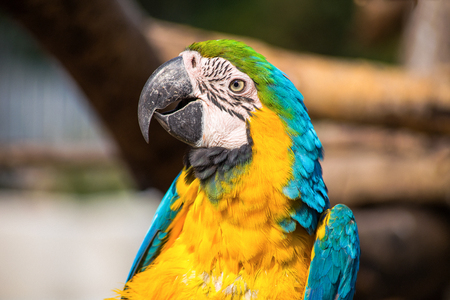 Parrot portrait 写真素材