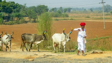 Jaipur, India, October, 20, 2017 - Indian shepherd on the way from Jaipur to Delhi, India, Asia.