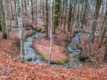 Autumnal landscape with forest of beech and mountain creek, Penna Mount, the Aveto Regional Natural Park, Italy. Standard-Bild