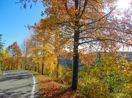 Maple trees in autumntime, Italy Standard-Bild - 134071059