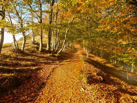 Autumn landscape in the forest of beeches, Italy. Standard-Bild - 134071353