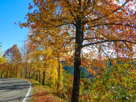 Maple trees in autumntime, Italy Standard-Bild - 134071578