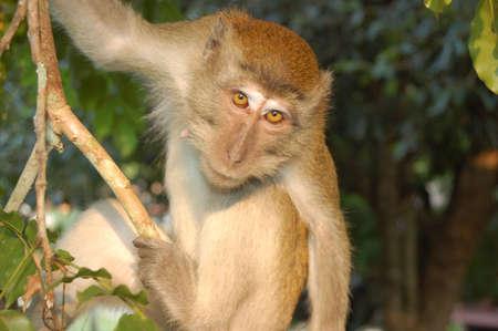 nagara: Monkey on the tree - Taman Nagara National Park - Malaesya