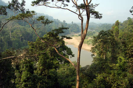 Rain Forest, Taman Negara National Park - Best of Malaysia Stock Photo - 590547