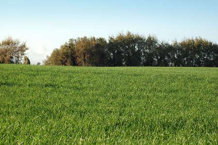grass field - Green hill landescape photo