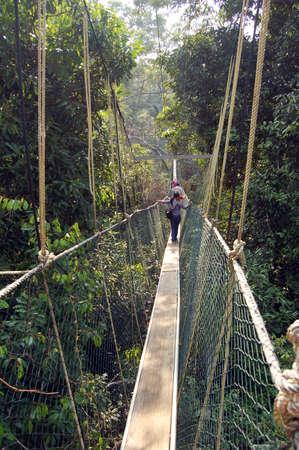 Canopy walkway, Taman Negara National Park - Best of Malaysia