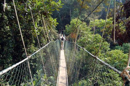 taman: Canopy walkway, Taman Negara National Park - Best of Malaysia