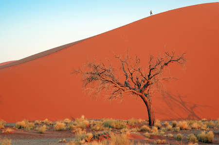 Woman on top of the red desert dune whit dead tree photo