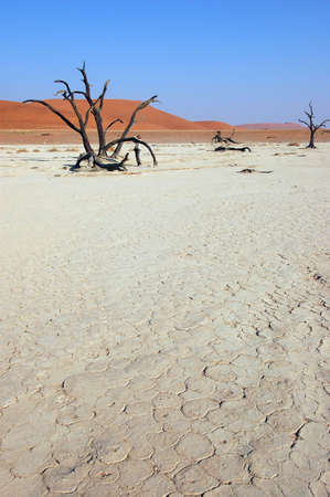 lack of water: Dry terrain and dune - Lack of water. Namibia, , Deadvlei, Sossuvlei.