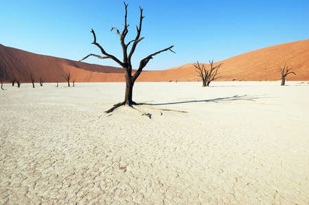 Dry terrain, dead tree and red dune - Lack of water. Namibia, Deadvlei, Sossuvlei. photo