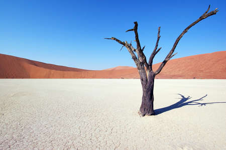 Dry terrain, dead tree and red dune - Lack of water. Namibia, Deadvlei, Sossuvlei. Stock Photo