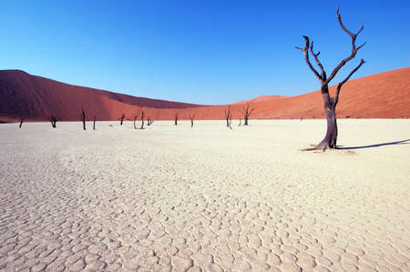 lack of water: Dry terrain, dead tree and red dune - Lack of water. Namibia, Deadvlei, Sossuvlei. Stock Photo