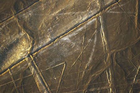 Spider, Nazca Lines in Peru Stock Photo