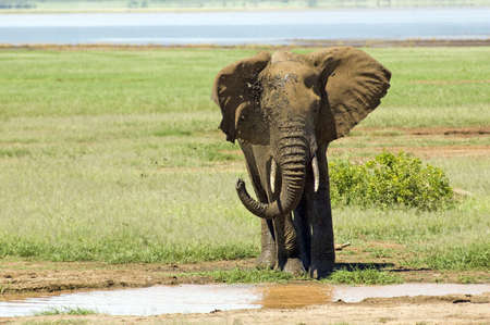 Elephant in the Lake Manyara National Park - Best of Tanzania photo