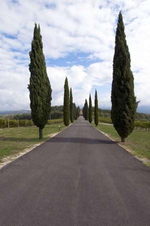 Typical road whit cypress Tuscany countryside - best of Italy photo