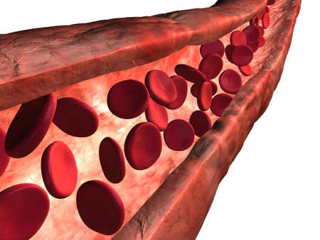 3d rendered vein with bloodcells Stock Photo - 3481830