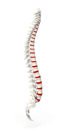 axial: Human Spine with red spinal disc isolated Stock Photo