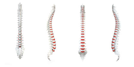 Human Spine with red spinal disc isolated turnaround